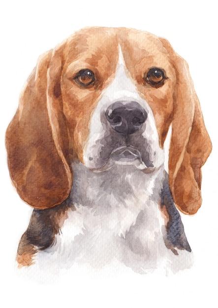 Pintura em aquarela de um cachorro safado chamado beagle Foto Premium