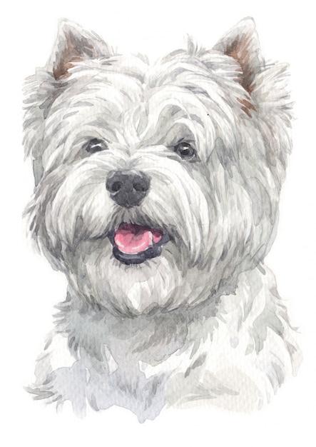 Pintura em aquarela de west highland white terrier Foto Premium