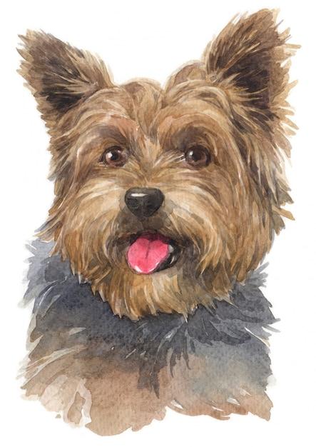 Pintura em aquarela de yorkshire terrier Foto Premium
