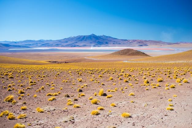 Planalto estéril de alta altitude dos andes, entre o mais importante destino de viagem na bolívia. Foto Premium