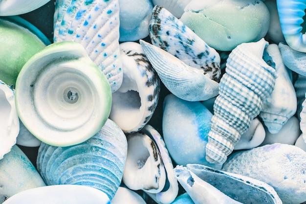 Plano de fundo azul claro de conchas do mar, close-up, vista superior Foto Premium