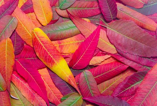 Plano de fundo de folhas de outono brilhantes vista superior close-up Foto Premium