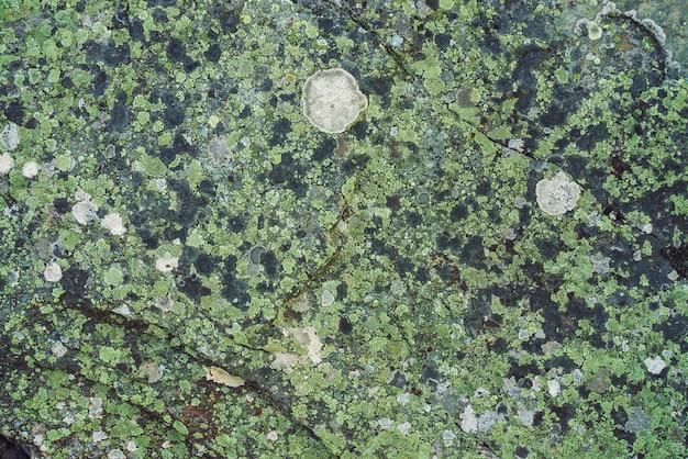 Plano de pedregulho multicolorido em macro. superfície bonita rocha close-up. pedra texturizada colorida. fundo detalhado surpreendente de pedregulho das montanhas com musgos e líquenes. textura natural da montanha. Foto Premium