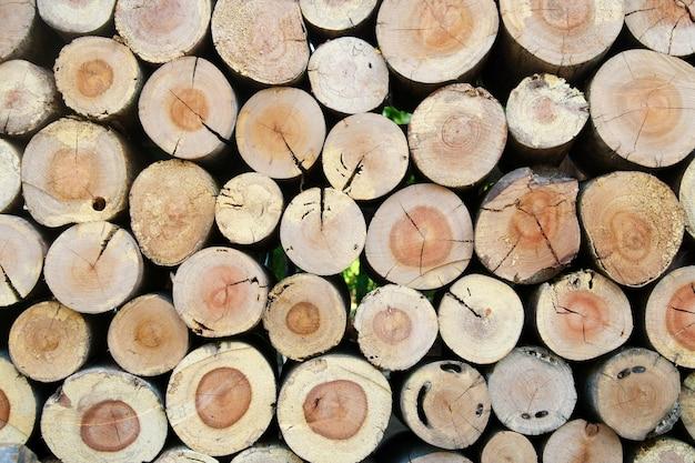 Plano de seção do log de madeira natural, plano de fundo Foto Premium