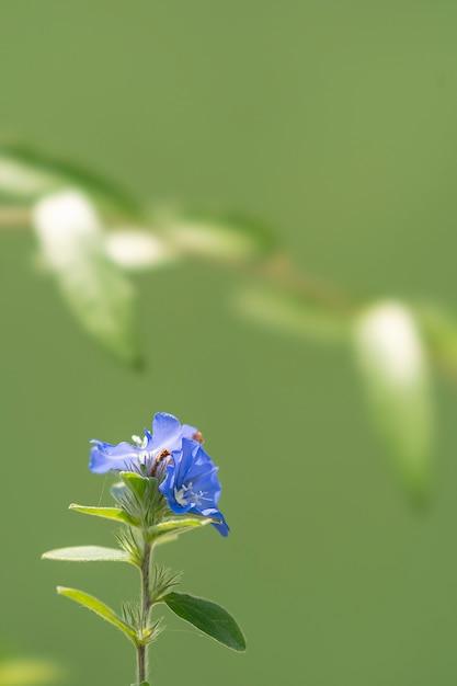Planta asiática localizada em bandung, na indonésia Foto Premium