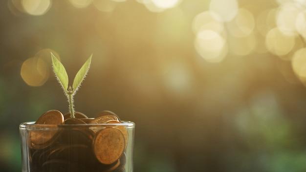 Planta crescendo em moedas de poupança Foto Premium