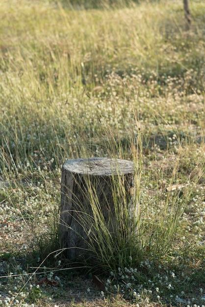 Planta de árvore de coto no campo de grama verde Foto Premium