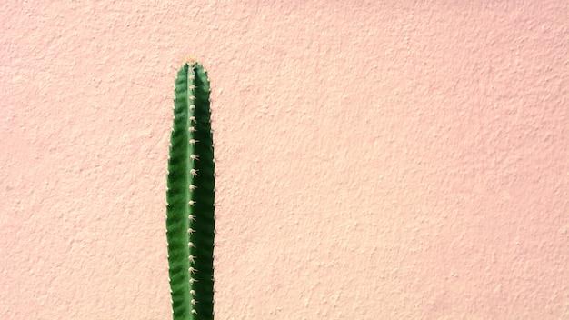 Planta de cacto verde frente a parede de cimento-de-rosa Foto Premium