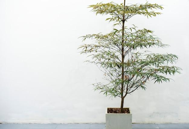 Planta de casa em uma panela branca Foto gratuita