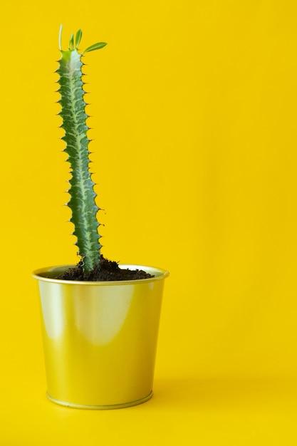 Planta de casa em vaso Foto Premium
