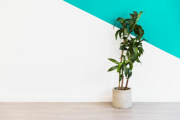 Planta de escritório na frente da parede Foto gratuita