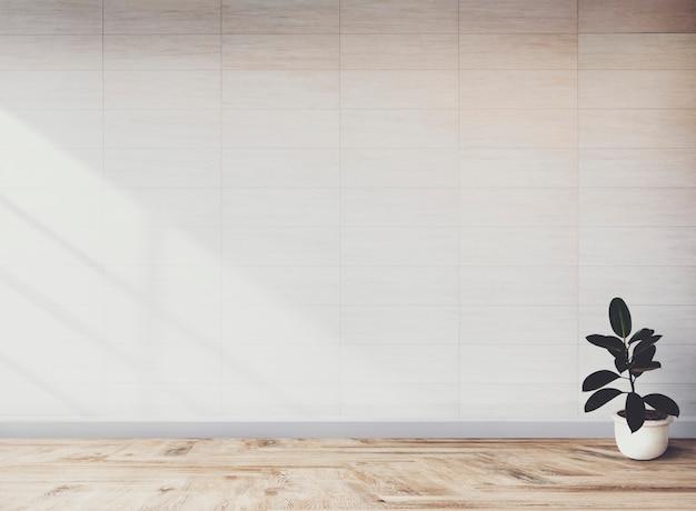 Planta de figo de borracha em um quarto vazio Foto gratuita
