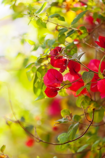 Planta de flores cor de rosa Foto gratuita