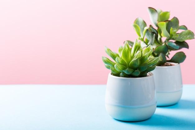 Planta de planta suculenta em vaso de cerâmica cinza Foto Premium