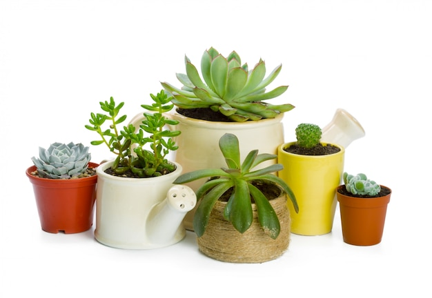 Planta de suculentas em vaso branco Foto Premium