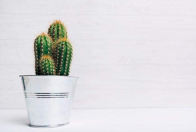 Planta de vaso de cacto contra fundo de madeira Foto gratuita