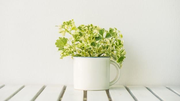Planta de vaso Foto gratuita