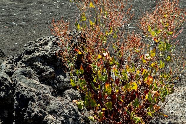 Planta do deserto crescendo ao lado de uma pedra Foto gratuita