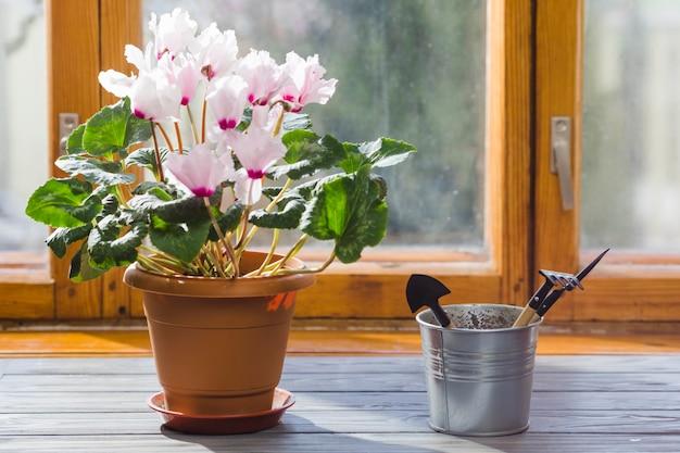 Planta e jardim ainda vida Foto gratuita