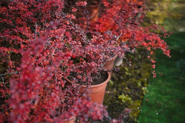 Planta em pote Foto gratuita