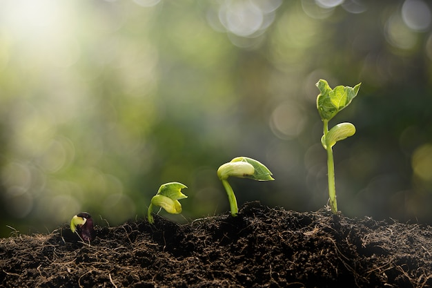 Planta jovem crescendo e fundo verde bokeh Foto Premium