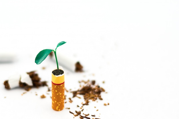 Planta jovem em cigarros no fundo branco Foto Premium