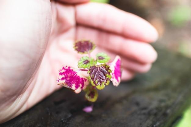 Planta minúscula pequena com proteção da mão humana. conceito de crescimento e suporte. Foto Premium