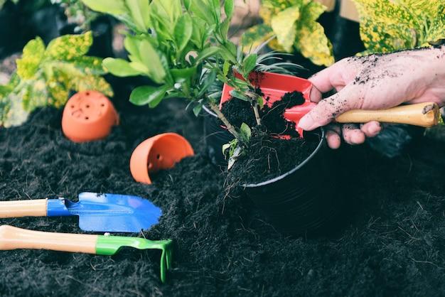 Planta na mão para o plantio no jardim / planta em crescimento obras de ferramenta de jardinagem no quintal Foto Premium