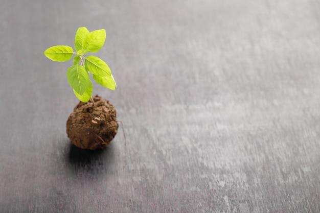 Planta pequena em blac Foto Premium