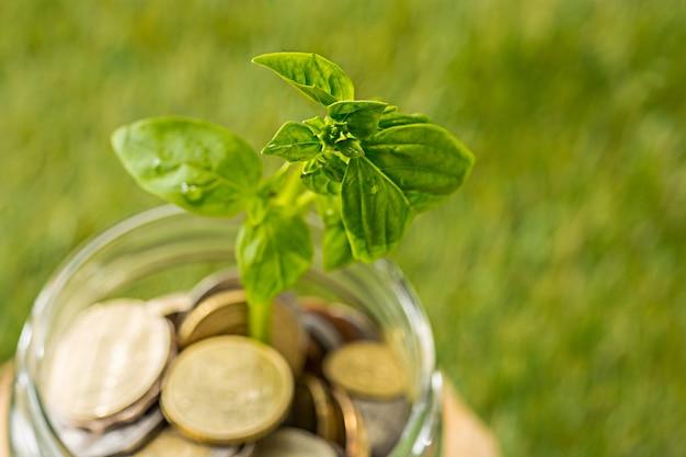 Planta que cresce em frasco de vidro de moedas por dinheiro na grama verde Foto gratuita
