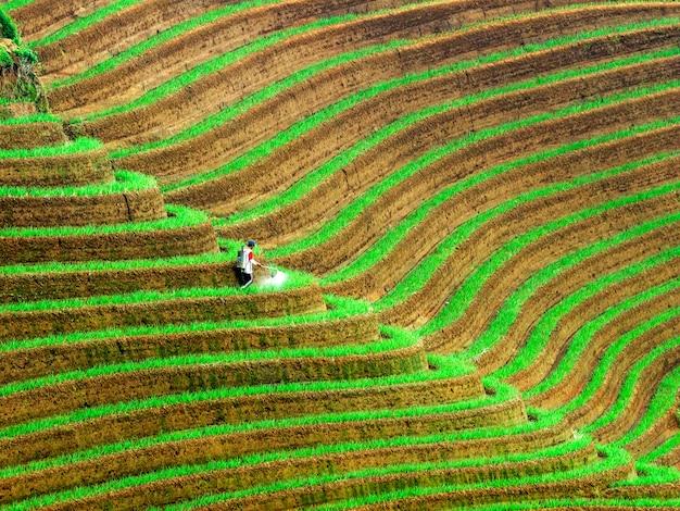 Plantação de campo de cebola Foto Premium