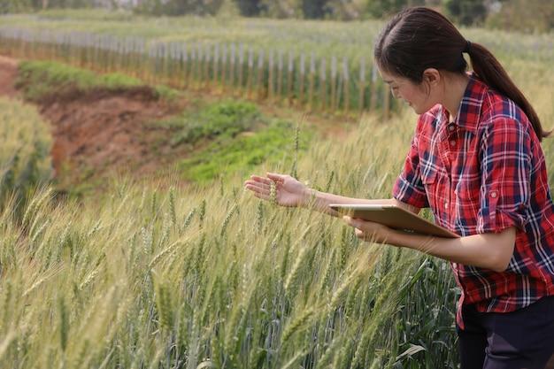 Plantação de campo de colheita de cevada de agricultor que verifica a qualidade de novas variedades de cevada pelo conceito moderno da tecnologia da agricultura da tabuleta. Foto Premium