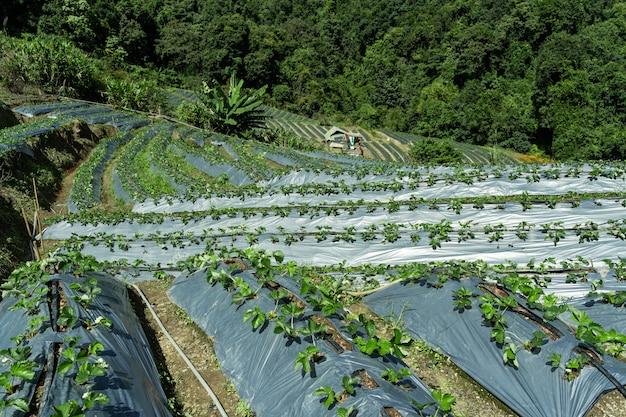 Plantações em socalcos no meio da floresta Foto gratuita