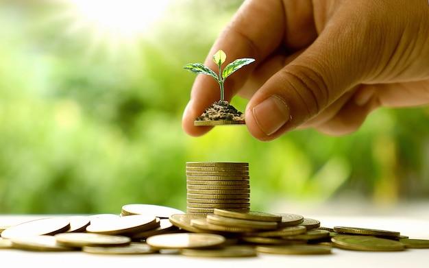 Plantando árvores à mão em moedas de ouro e fundos verdes naturais. idéias para poupar dinheiro. Foto Premium