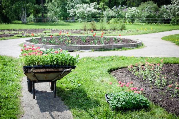 Plantando plantas, flores no parque, jardim, carrinho de mão, terra, cultivo Foto Premium