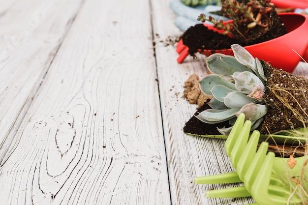 Plantando suculentas em vasos com solo japonês e pá Foto Premium