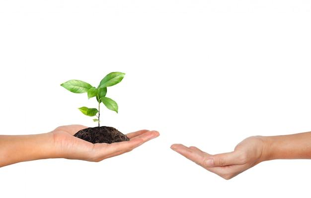 Plantar na mão isolada no fundo branco Foto Premium