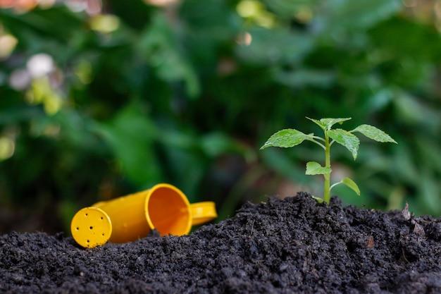 Plantar uma planta pequena em uma pilha de solo Foto Premium