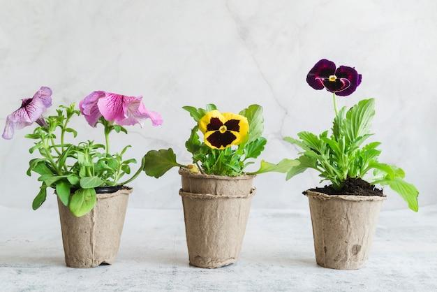 Plantas com flores nas panelas de turfa contra o pano de fundo cinzento Foto gratuita