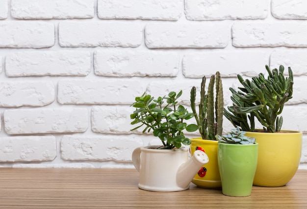 Plantas da casa. suculentos Foto Premium