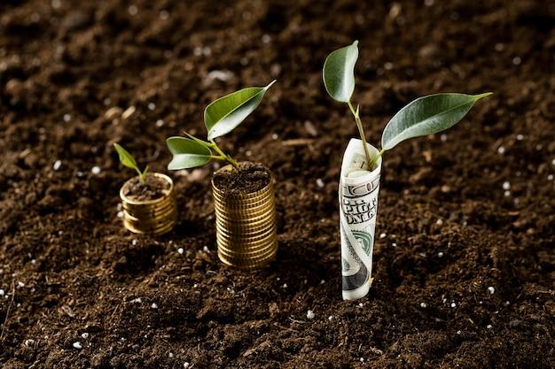 Plantas de alto ângulo com moedas empilhadas na terra e notas Foto gratuita