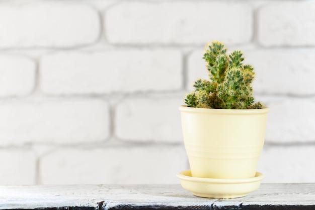 Plantas de casa em vasos na mesa branca na parede de tijolos brancos com objetos Foto Premium