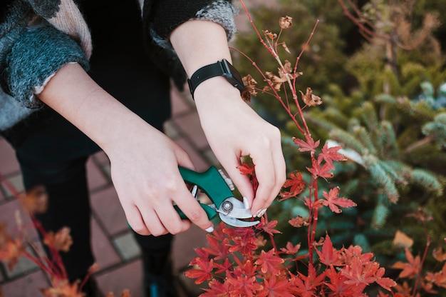 Plantas de corte Foto gratuita
