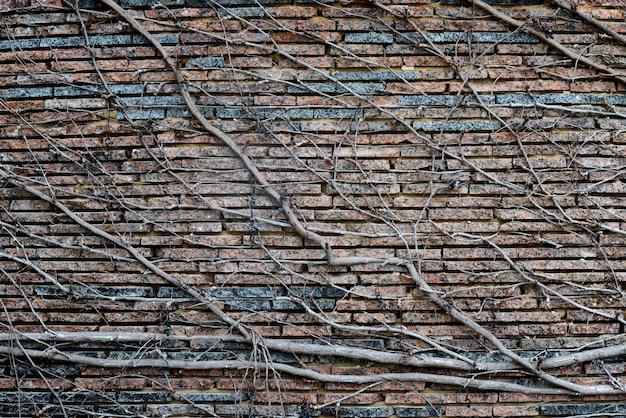 Plantas de escalada com bagas secas em uma parede de tijolo. fundo Foto Premium