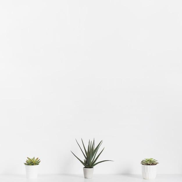 Plantas de escritório em vasos Foto gratuita