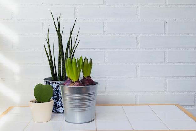 Plantas de interior na casa. decoconceito do minimalismo. espaço para copytext Foto Premium