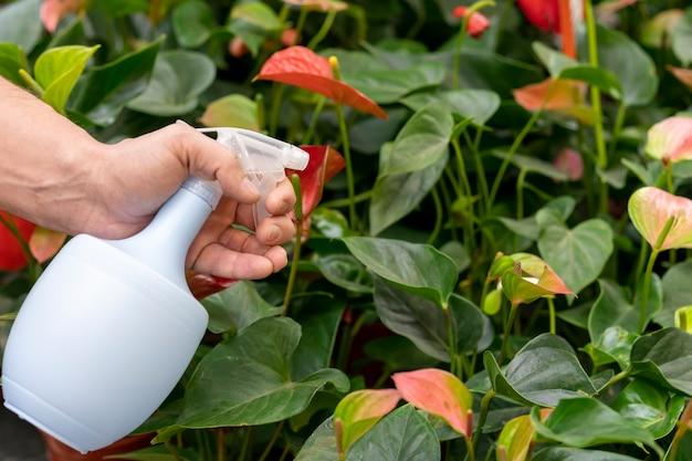 Plantas de pulverização de close-up com garrafa de água Foto gratuita