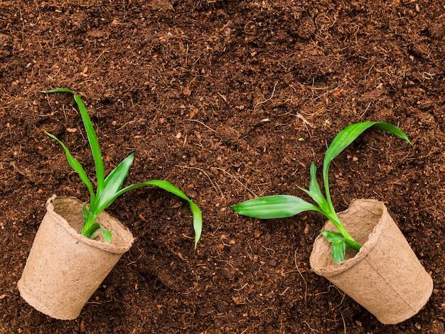 Plantas de vista superior Foto gratuita