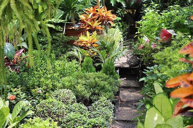 Plantas do jardim Filipinas Manila  Baixar fotos gratuitas