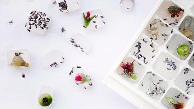 Plantas em bandejas de gelo perto de flores e sementes Foto gratuita